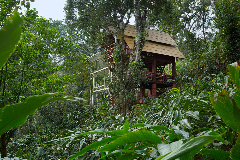 Tree House Stay ( Munnar)